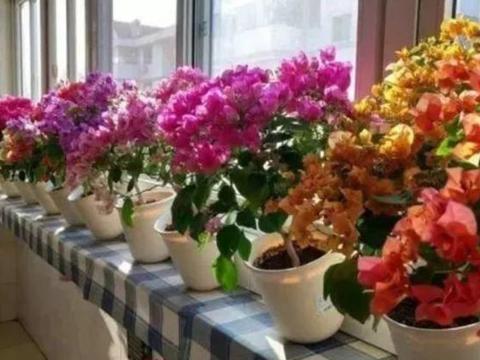 """4种花,堪称""""开花机器"""",注意养护细节,一年四季开不停!"""
