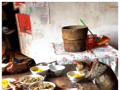 奶奶吃饭时多装一个碗,随后画面女子笑喷,网友:最有地位的猫