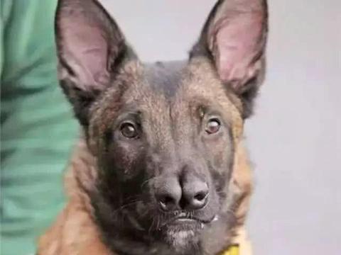 狗狗天生两个鼻子,四个月大被弃养四次,终于遇到了真心爱它的人