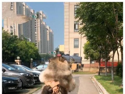 美女抱着大型玩偶走在路上,男子看着不对,走近一瞧:是条活狗