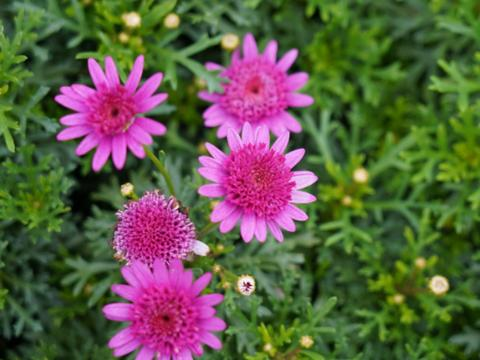 花卉换土,需要选对时机,才能不出错