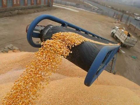 玉米收获行情大涨,是卖粮还是惜售?卖粮的时机可要心里有数!