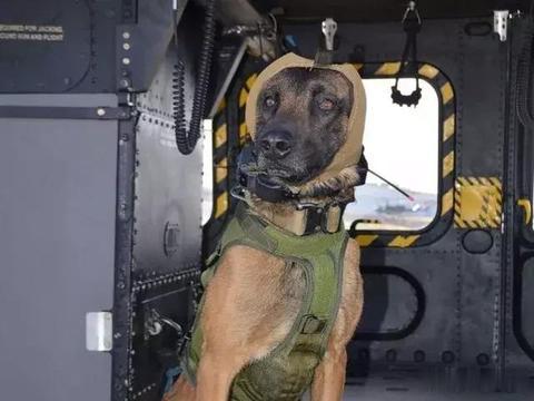 """美军为军犬研发新型降噪耳罩,外形犹如""""狼外婆"""",非常酷"""