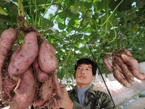 超市卖3元一斤,农民卖30元一斤?说到底还是品质问题