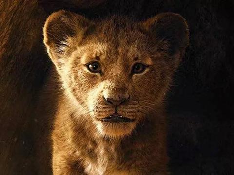 上映10天:新版《狮子王》票房超越了1994年的原版