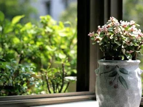 养花在风水上有讲究 哪些能招财?哪些能镇宅?