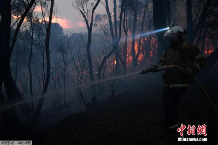 澳大利亚山火蔓延 一医院筹款120万澳元为考拉重建家园