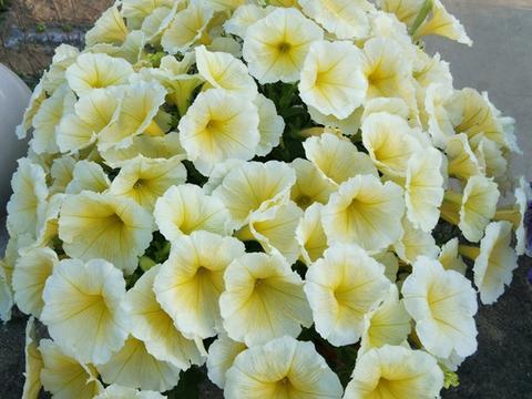 养花就养这三种,不经意间就开花,花期还一个比一个长