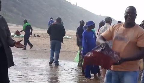 10吨重的鲸鱼搁浅海滩,非洲人一天将肉全部刮分,镜头拍下全过程