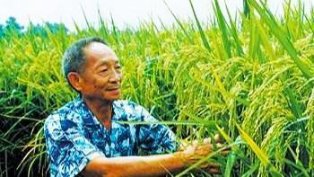 挖井人袁隆平的超级稻亩产1200公斤,以后会更好吃,相信我