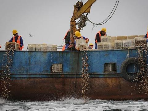 獐子岛回复关注函称,其他海域也存在扇贝死亡情况