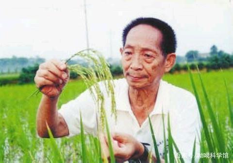 杂交水稻去到非洲之后,变成了这样?