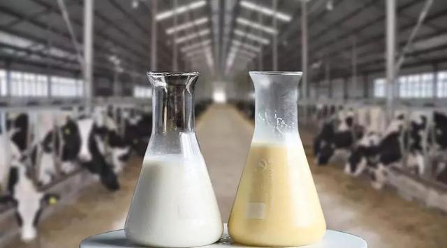 """""""被禁""""过后的牛初乳,能否再崛起?"""