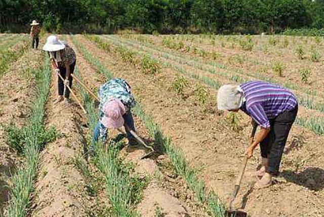不是有农业户口的人就有土地,那些没地的农民还能申请土地吗?