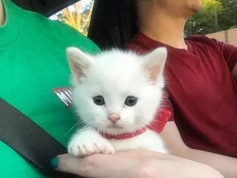 耳聋多趾的小奶猫被遗弃,大金毛不仅霸气领养,还把它宠上了天!