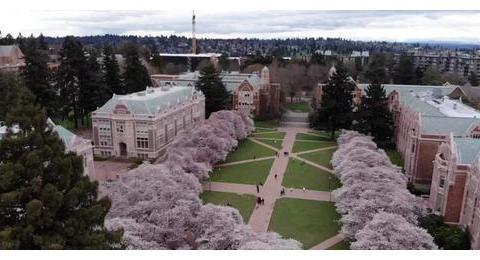 不要去华盛顿大学,因为会爱上那里的樱花季