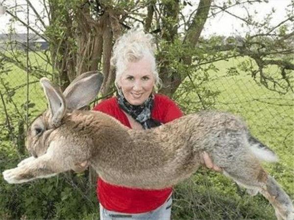 """""""人兔大战""""刚消停,又一物种赖在澳洲,中国吃货:这回不敢碰"""