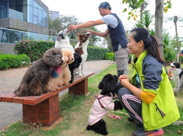 养狗的人5大共性,藏不住,也不需要藏,因为这是荣耀