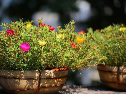 在阳台上面养这几种植物,再也不用担心被晒伤啦