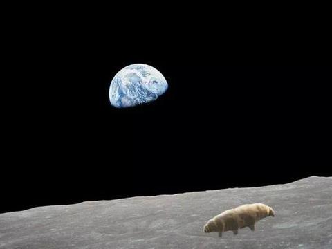 以色列探测器给月球带去一种动物,探测器没了,有人怀疑动物活了