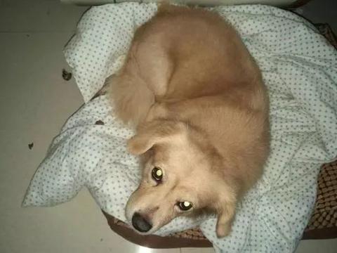 狗狗爱不爱你,从它睡觉的地方判断出来!你家狗狗都睡哪里?