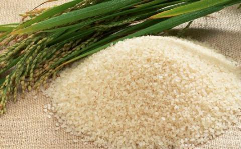 """打开光合作用""""魔盒"""",未来水稻转基因还是杂交?"""