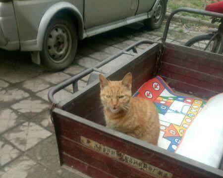 喂养过的流浪橘猫,每天做的事情就是等我,也许只有流浪才会珍惜