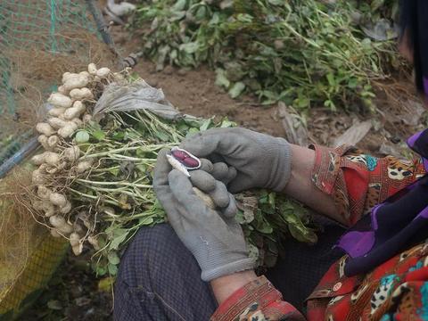 一斤能卖出20元高价,农民却不愿意种,又是转基因的错?