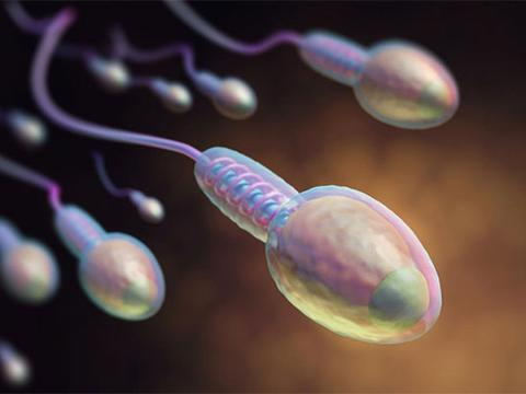 塑料污染影响人类精子的数量和质量