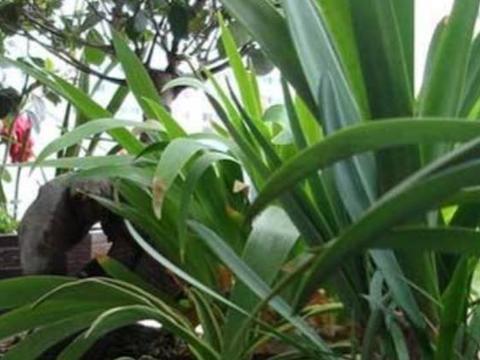 农村4种动物粪,制作成养花肥,每次用一点,花卉长得旺