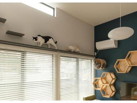 2室1厅,次卧打上下铺给两只猫睡,看着太羡慕了!猫过得都比我好