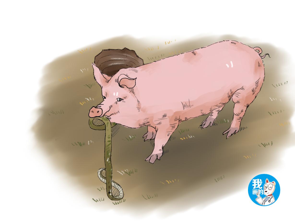 女子去喂猪,发现它在啃一根长条形异物,蹲下一瞧直呼长本事了