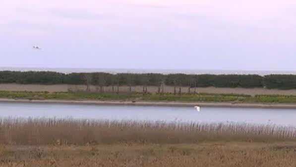 冬日湿地生机盎然!珍稀候鸟频现启东黄金海滩