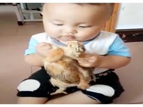 """1岁男孩上演""""手撕活鸡"""",奶奶表情太无奈!网友:长大是个狠人"""