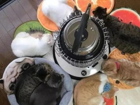 天冷了猫咪看见取暖器后,就如同见到了小鱼干一般,特别有趣
