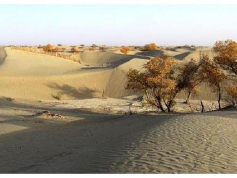 为治理塔克拉玛干沙漠,中国曾耗资上亿种植胡杨林,如今却成这样