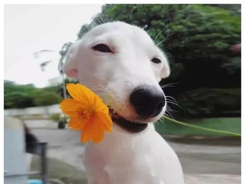 心理测试:凭你的直觉选出一只最萌的狗,测结婚后你会变得多傻