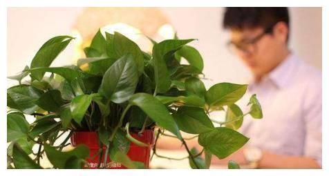 冬天不常开窗,几种花卉一定要养起来,净化空气细菌少