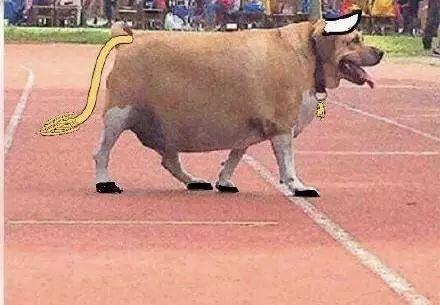 流浪狗被学生喂成牛,校方:禁止再喂食,别好心办坏事