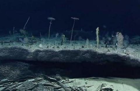 中国潜水艇深入水下3700米,眼前的这一幕引人后怕,这还是地球吗
