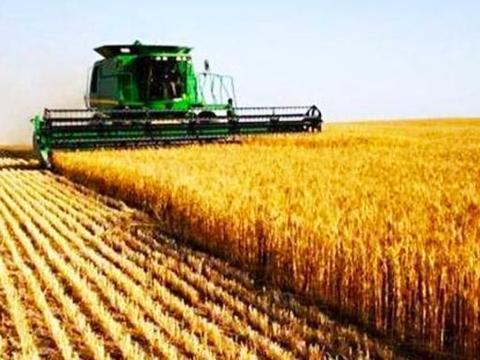 粮食价格总不见上涨有4个原因,要提升经营收益,就改变种植模式