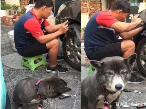 狗狗发狂咬坏隔壁邻居的车子,原因让人哭笑不得!