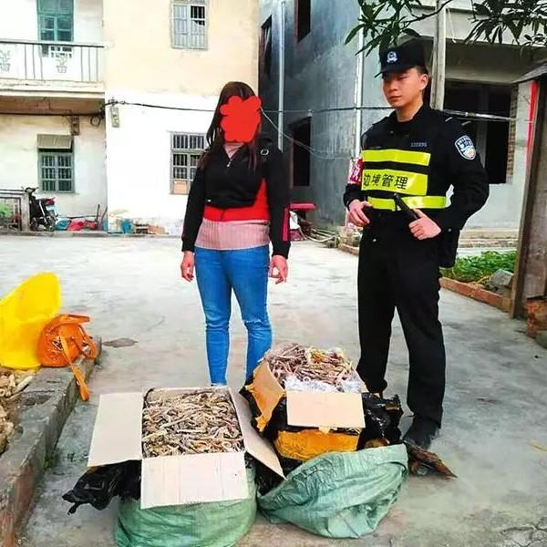 广西查获特大走私野生动物制品案缴获海马干近万尾