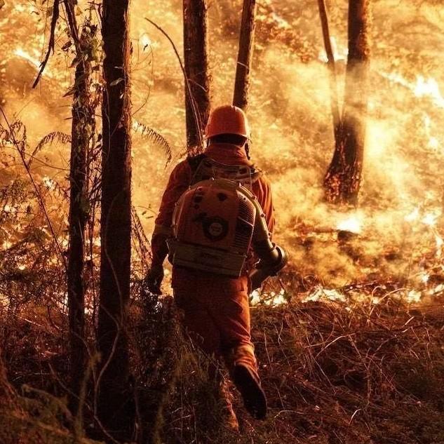 高明森林火灾扑救继续,他们逆风前行的身影,感动了所有人!