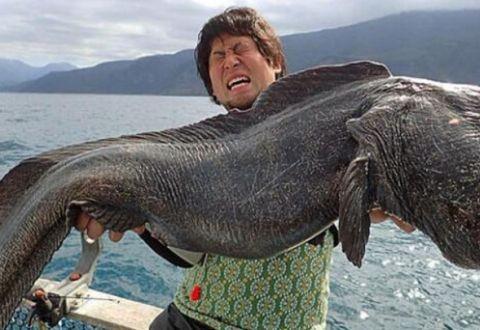 """切尔诺贝利发现""""巨型老鼠"""",体重超过一百斤,家猫看了都害怕"""