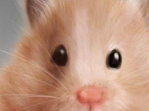 """为什么""""航空母舰""""上会有老鼠?它们是从哪里来的呢?"""