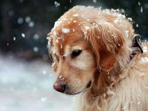 """有这6种迹象的狗狗,说明""""时间""""不多了,你就多陪陪它吧"""
