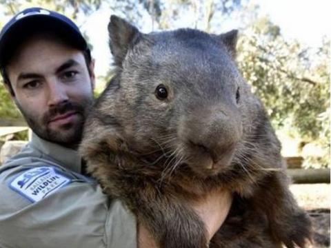 """切尔诺贝利发现""""巨型老鼠"""",体重高达100斤,猫看了都两腿发软"""