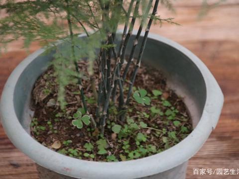 养文竹的人注意了,用这样的水浇,相当于白养了,真实经验分享