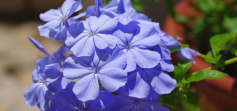 3种名字带雪的花卉,每一种都格外的淡雅宛如,你最偏爱哪一款?